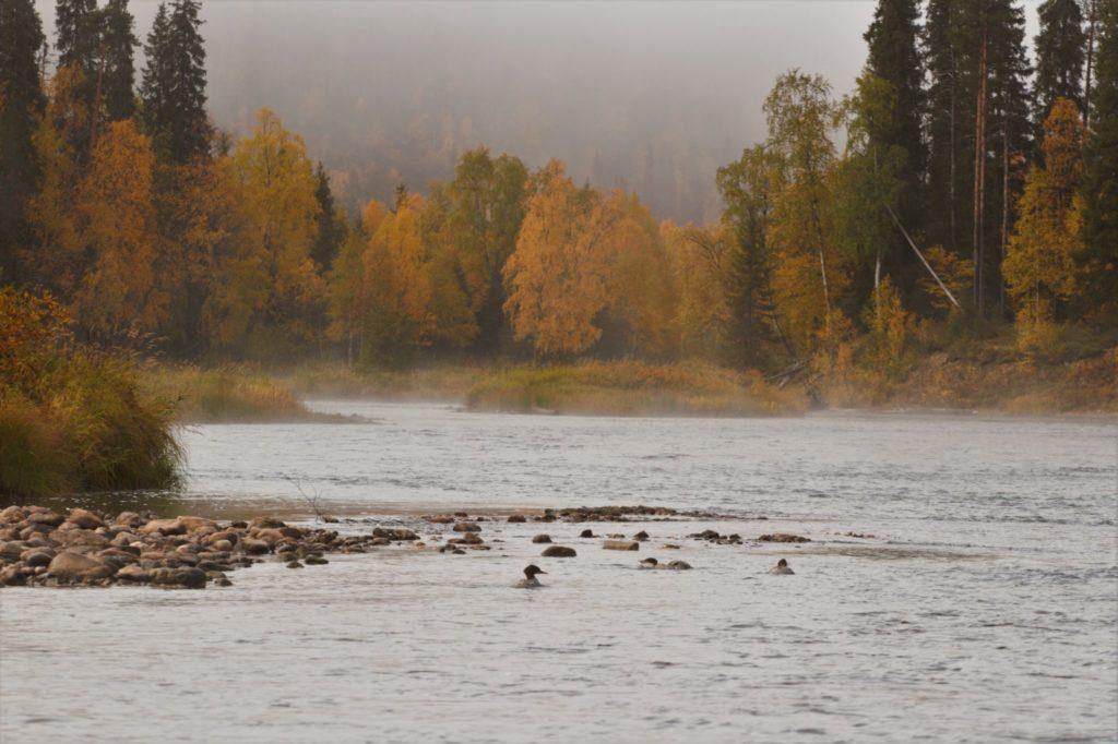 Uitzicht vanaf het kamp in Finland.