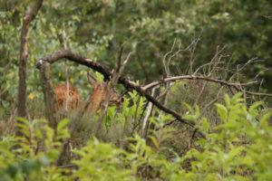 #Wild | Je ziet dieren vaak maar gedeeltelijk