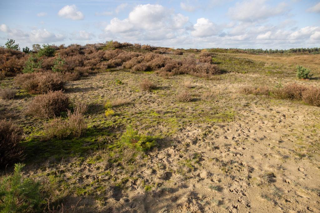 Zandverstuiving en heide omgeving Kootwijk.